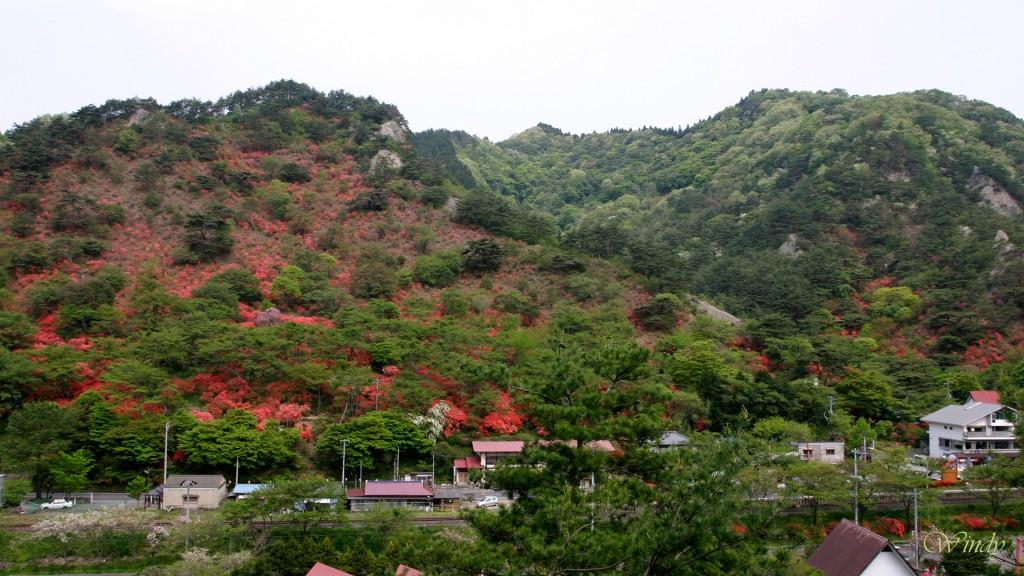 山一面が真っ赤になる。