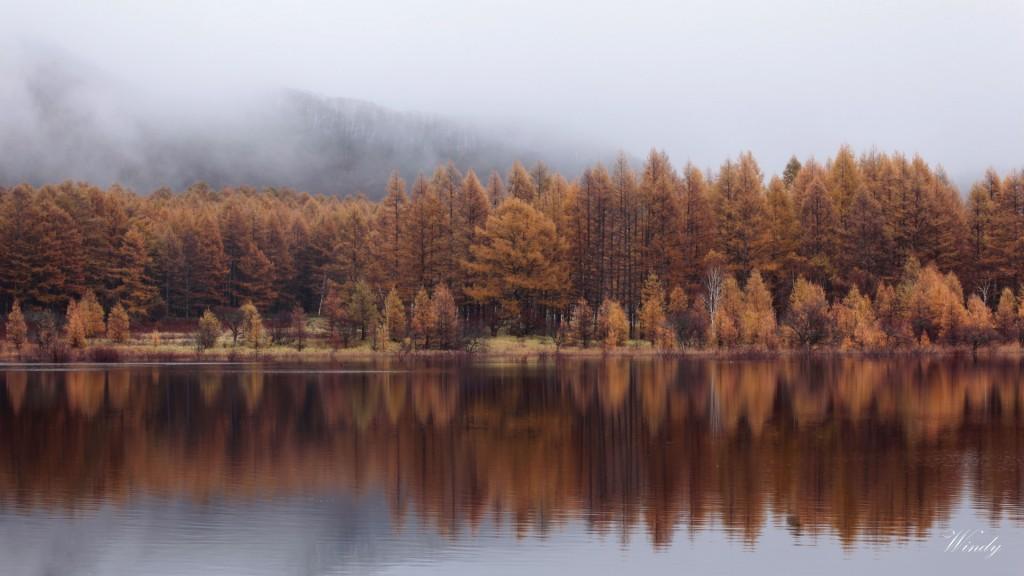 小田代ヶ原の秋
