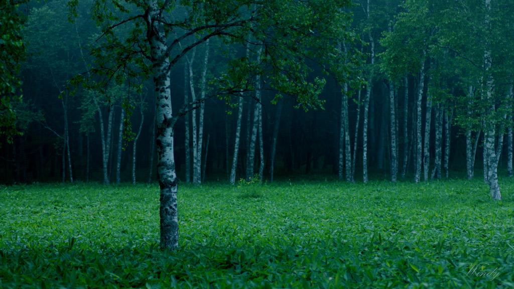 Pavane de la Belle au bois dormant.