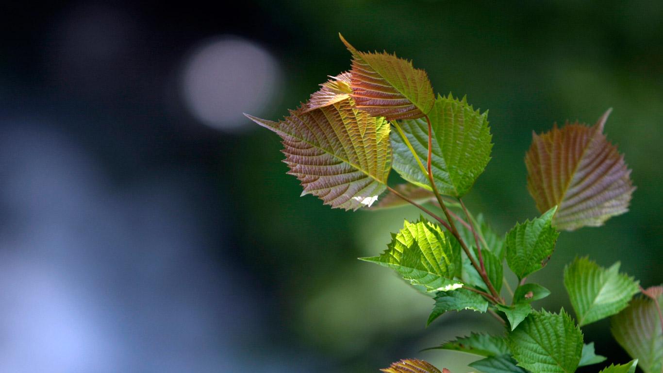 green2003